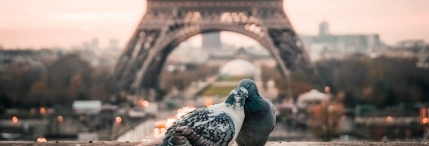 Two pigeons on the background of the Eiffel Tower